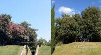 Fig. e – Comparative du résultat obtenu avec le traitement ENDOterapia Vegetal® d'un groupe de Quercus ilex affectés par Kermes. Nous pouvons observer la récupération expérimentée après un an de traitement.